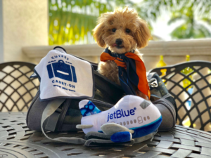 JetBlue Airlines Pet Policy